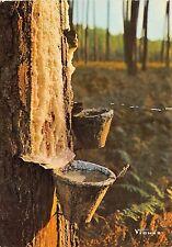 BR25270 Pot de resine au soleil d automne Landes France