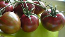 Purple Bumble Bee Cherry Tomato Seeds