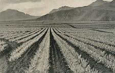 HI * Dole Pineapple Fields & Mountains 1930s *  Farm Plantation