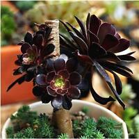60pcs Succulents Rare Mini Potted Flower Seeds Home Office Decoratives 07#Jи