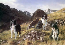 More details for steven townsend summit meeting border collies working