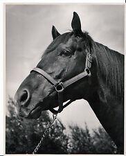 8X10 Original Glossy of SeaBiscuit -   Head Shot - Ridgewood Ranch - Racing