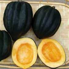 Table King Pumpkin - Squash - 5+ seeds - Heirloom - RICH and FINE!