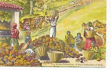POSTCARD  ADVERTISING  COCOA  Collection of Pods