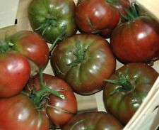30 Black from Tula Tomato Heirloom seeds. ***SAME DAY SHIPPING***