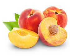 Peaches Ebook, 295 Recipes in PDF on CD - FREE SHIPPING!