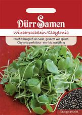 100 Samen Salat Gemüse lobjoits grün Wirtschaft
