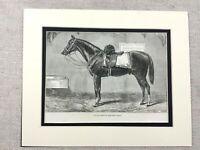 1875 Antik Pferd Aufdruck Militär Schlachtross Krim Krieg Survivor Reiter Kunst