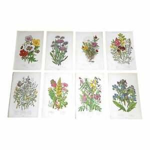 Antique 19th Century Botanical Lithographs - Set of 8