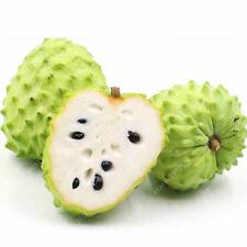 SOURSOP Graviola Guanabana Annona muricata SEEDS Tropical Fruit 10 pcs