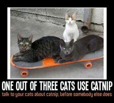 "FUNNY CAT MEME ""CATNIP"" FRIDGE MAGNET 5' X 3.5'"