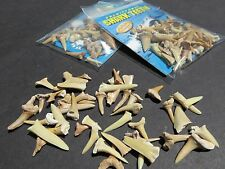 Shark Tooth Teeth Assorted Fossil Mineral Rock Mixed Lot 2 Packages total #1