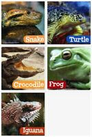 Reptiles Stickers x 15 - Party Supplies/Favours - Amphibians - Frog/Snake/Iguana