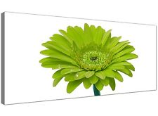 Lime Green Large Canvas Print of Gerbera Floral  - 120cm x 50cm - 1098