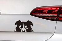 Hunde Aufkleber süßer Border Collie  Hunde Sticker JDM Decal aus Premium Folie