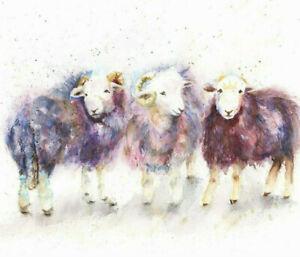 Fine Art Print of HERDWICK TRIO SHEEP watercolour by HELEN APRIL ROSE   561