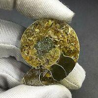 1 pieza de fosil de amonite - 14 grs