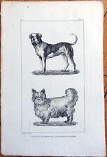 1830s French Animal Print: Le Dogue de Forte Race, Chien de Siberie/Siberian Dog