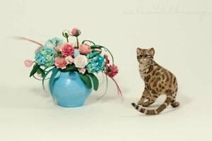 OOAK  Handmade ~ Marble Bengal Cat ~ Miniature Dollhouse Sculpture