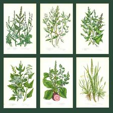 Lot of 6 ORIGINAL ANTIQUE 1893 ANNE PRATT FLOWER PRINTS GRASSES SEDGES FERNS 20