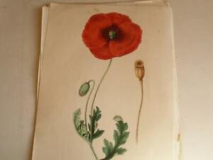 ENCYCLOPAEDIA OF USEFUL & ORNAMENTAL PLANTS G Burnett Vol 1 only 124 plates  17N