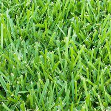 Sod Plugs 36-Count Trays Harmony St. Augustine Grass Blanket Yard Lawn Patio