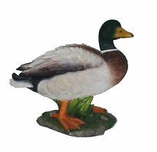 Vivid Arts - Real Life Mallard Duck Home or Garden Decoration (XRL-MLLD-A)