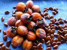 American Persimmon Tree (Diospyros virginiana) - 30 Seeds - Native Fruit Tree