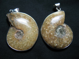 Ammonite Pendant with Silver Coloured Metal Frame and Bail 30-40mm