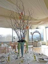 10 DRIED Corkscrew curly Willow Branches 2-3 Ft Perfect for COUNTRY DECORATING