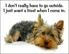 Metal Refrigerator Magnet Don't Have Go Outside Want Treat Dog Yorkie Humor