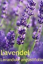 ***Lavendelöl, naturrein, Mt. Blanc, 10ml (Frankreich), Topp!