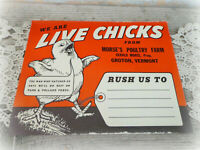 vintage LIVE CHICKS Morse's Poultry Farm Groton VT crate label sign lot of 2