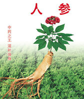 Chinese Ginseng Seed 10 Seeds Root Healthy king of Medicinal Plant