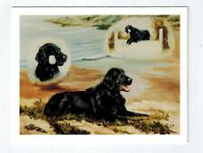New Flat Coated Retriever 3 Retrievers Notecards 12 Note Cards By Ruth Maystead