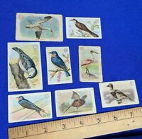 8 Early Arm & Hammer Trade Cards Birds Useful New Series lot Antique VTG Rare 25