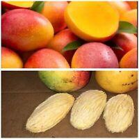10Pcs Mango Tropical Fruit Tree SEEDS (Haden varieties)