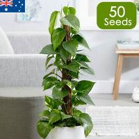 Buy Devils Ivy Plant Vine x50 Seeds Indoor House Plants Outdoor Screening Rare