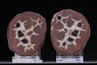 Septarian - calcite from Midelt Morocco bouth half nodule