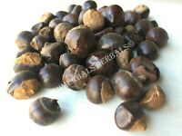 Guarana Seed, Paullinia cupana ~ Sacred Herbs and Spices from Schmerbals Herbals