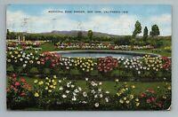 Municipal Rose Garden, San Jose, California Postcard