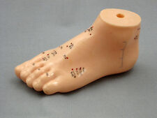 Foot Acupuncture Anatomical Model New