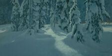 """Deep in the Winter - Wolves - Robert Bateman LTd Paper Print size 14"""" x 28"""