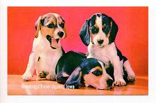 Greetings Ogden IA Iowa (Boone County) Beagle Puppies