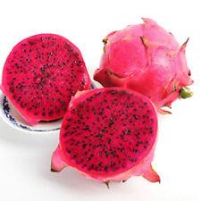 "3 Purple Dragon Fruit 8-10"" Inch Cuttings"