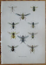 Burgersdijk De dieren Colored Lithograph Insect Bee Fly Wasp (6) - 1864