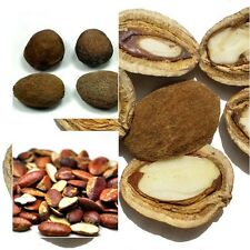 IRVINGIA MALAYANA NUT, RARE, UNIQUE NUT, Tropical Tree, 15 Seeds From Thailand