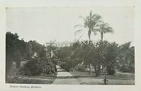 .BRISBANE , BOTANIC GARDENS QUEENSLAND EARLY 1900's POSTCARD