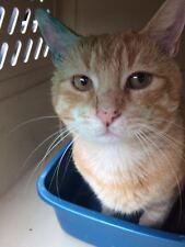 SPONSOR FIND STOLEN CAT ODIN A FERAL CAT REC COLOR RESCUE PHOTO Non-profit ResQ