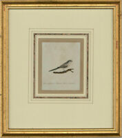 Attrib. Sir William Charles Ross RA- Mid 19thC Watercolour, Long-Tailed Titmouse
